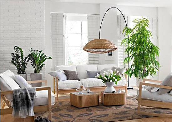 生活家居绿植应该如何搭配?